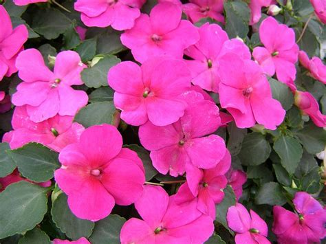 bushes that bloom all summer shade plants that bloom all summer for the home pinterest