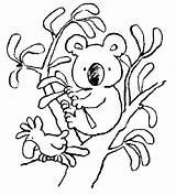 Koala Coloring Pages Bear Printable sketch template
