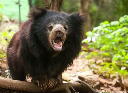 Sloth Bear Spot Moon Difference Bears Animals