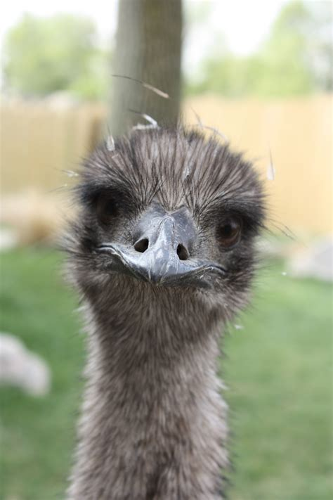 emu lafayette  official website