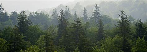 Ben Greenberg Photography Foggy Evergreens at Grayson ...