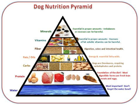 dog food analysis  diet tips  facts   dogs