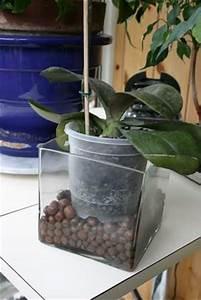 Grand Bac Pour Orchidées : conseils pour avoir de belles orchid es ~ Melissatoandfro.com Idées de Décoration