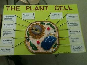 Plant Cell Plant Cell Diagram Labeled