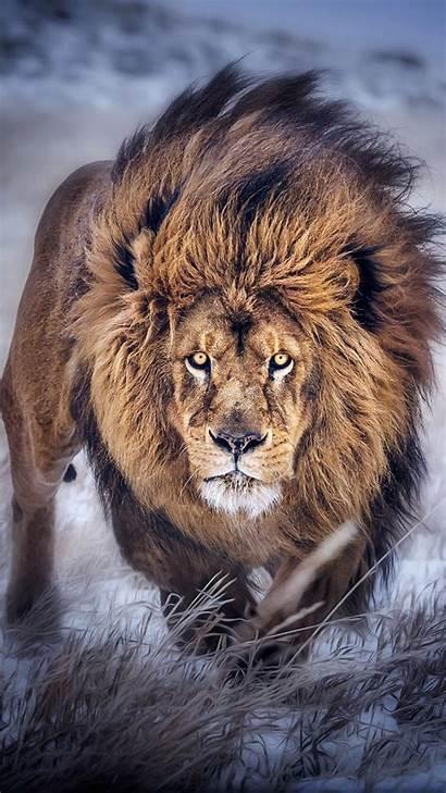 Lion Iphone