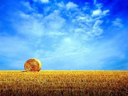 Summer Backgrounds Cornfield Yellow Sky
