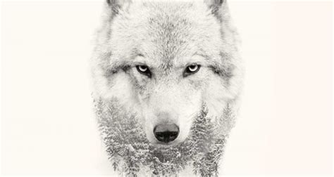 strong wolf quotes  pump   wolves wolfpack