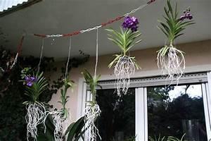 Orchideen Ohne Topf : orchideen seite 67 ~ Eleganceandgraceweddings.com Haus und Dekorationen