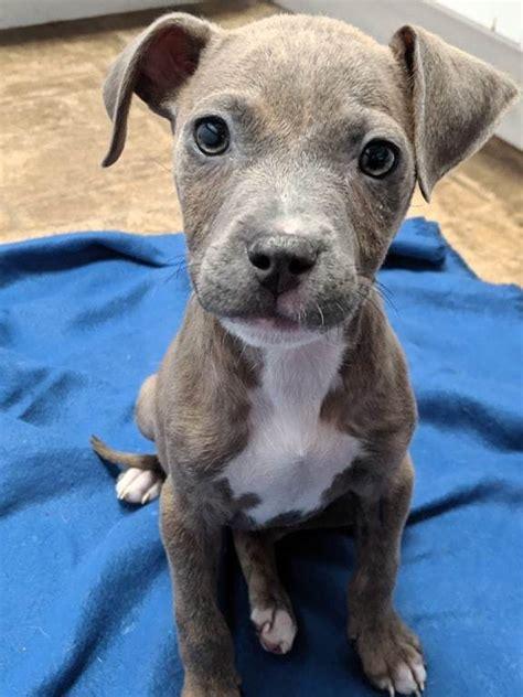 pets  adoption  precious pound pups