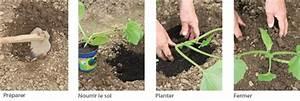 Quand Planter Courgette : planter les courgettes ~ Dallasstarsshop.com Idées de Décoration
