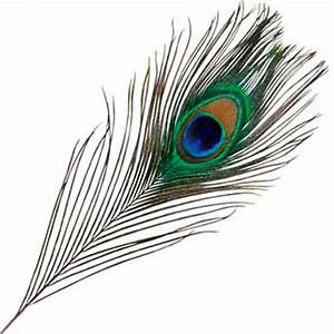 Plume De Paon Dessin : how to draw a feather of a peacock with a pencil step by step ~ Zukunftsfamilie.com Idées de Décoration