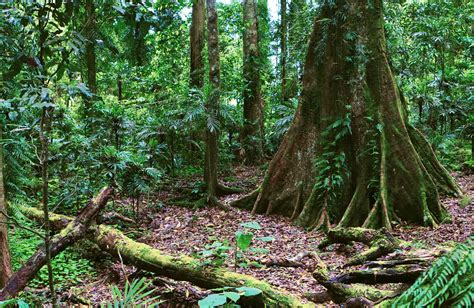 The Gondwana Rainforests of Australia NSW National Parks