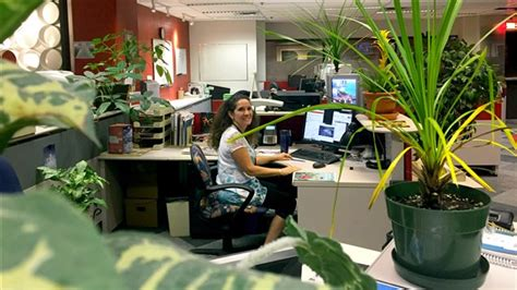 plantes de bureau sans soleil les bienfaits des plantes vertes au travail ici radio