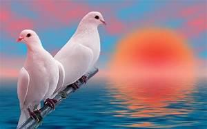 Lovebirds Wallpaper (56+ images)