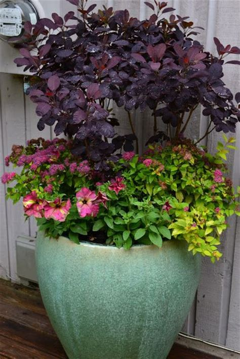 images  outdoor potted plants  pinterest