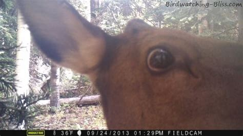wingscapes birdcam  trail camera review