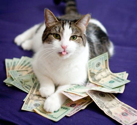 calico cat money facts cats address states united