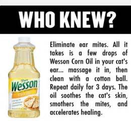 how to get rid of ear mites in cats great treatment to help ear mites while cleaning and
