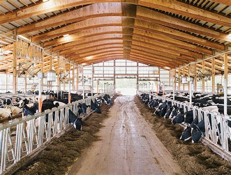 Dairy Cow Shed Design - the dairy barn redesigned modern farmer