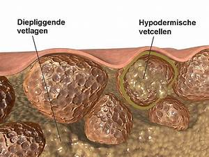 Biotics bio-butyric capsules online Dokter drogist