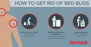 Bed bug bites what you need to know for Does washing get rid of bed bugs