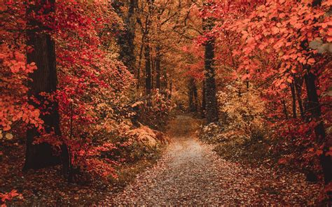Download wallpaper 1920x1200 autumn, forest, path, foliage ...