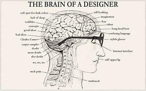 The Brain Of A Designer  In Diagrams