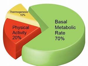 Basal Body Chart When Bmr Calculator For Weight Loss