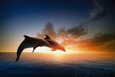 accessoires chambre saut des dauphins poster mammifère de l 39 océan