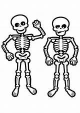 Skeleton Coloring Pages Skeletons Human Face Drawing Skulls Skeletal System Easy Colouring Printable Skull Anatomy Toddler Preschool Sheets Getcolorings Coloring4free sketch template