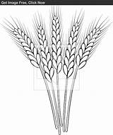 Wheat Outline Drawing Clip Stalk Clipart Coloring Pages Drawings Sketch Pyrography Tattoo Sketches Embroidery Patterns Getdrawings Grass Visit Stencils Sketchite sketch template