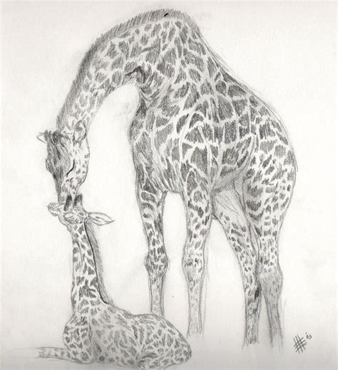 giraffee drawings giraffe sketch  killslay steelclaw
