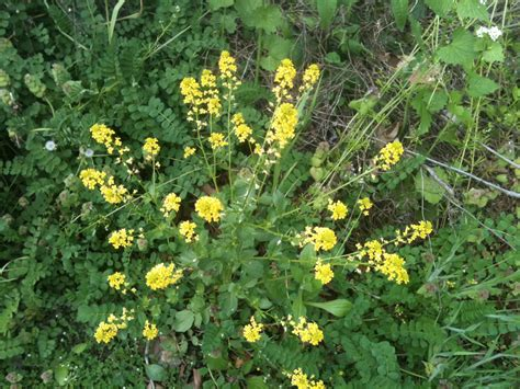 weeds with yellow flowers yellow flowers rooted in the earth