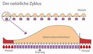 Länge Des Zyklus Berechnen : zyklus ~ Themetempest.com Abrechnung