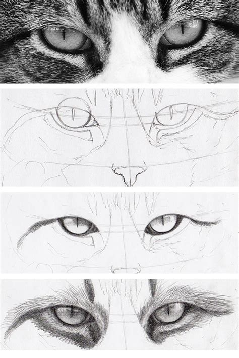 How To Draw Cat Eyes That Look Real