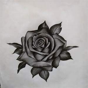rose flower sketch pencil on Instagram