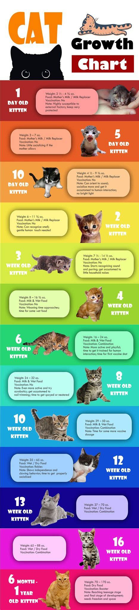 cat growth chart infographic  infographics