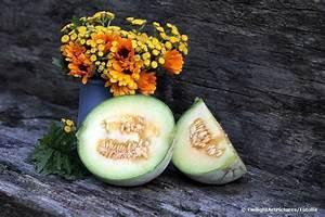 Perlschlauch Selber Bauen : melonen anbauen so gelingt es zuckermelonen selber ziehen ~ Yasmunasinghe.com Haus und Dekorationen