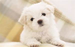 Online Wallpapers Shop: Cute Puppy Pictures, Puppy ...  Cutest