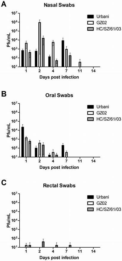 Virus Shedding Sars Replication Animals Cov Infected