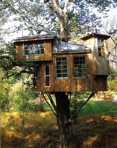 amazing tree houses  wished   growing