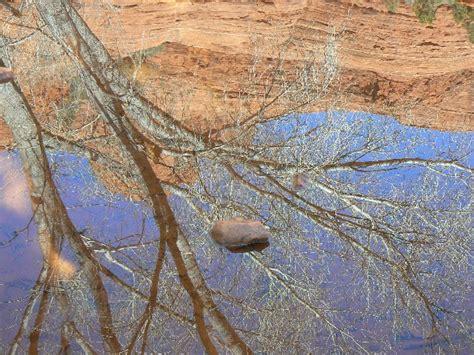 Steamboat Haiku by Hiking Northern Arizona 2008 Bush Haiku Long Canyon