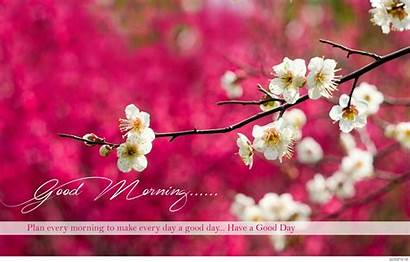 Morning Wishes Wallpapers Cool Wide