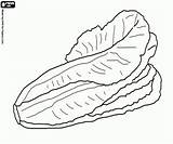 Lettuce Coloring Vegetables Pages Oncoloring Printable sketch template