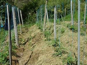 Planter Des Graines De Tomates :  ~ Dailycaller-alerts.com Idées de Décoration