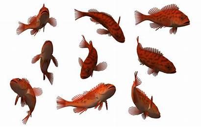 Deviantart Fish Wayne Splash Water Deviant Wixmp