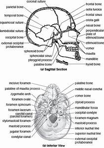 17 Best Images About Anatomy And Physiology On Pinterest