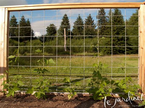 hog wire priceless parsnips