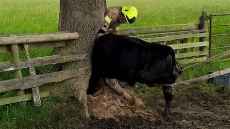 northallerton   head stuck  tree released bbc news