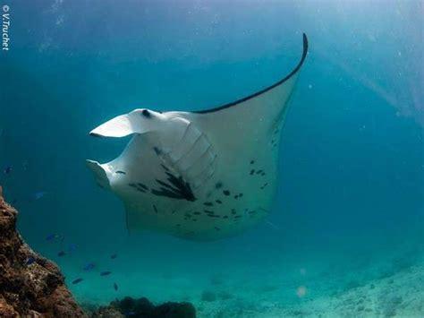 scuba diving  bora bora tahiti excursions
